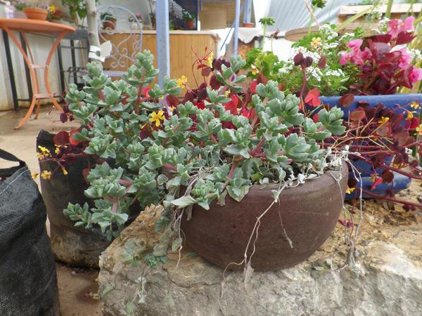 צמחי נוי ופרי, ציוד לגינון ומתנות